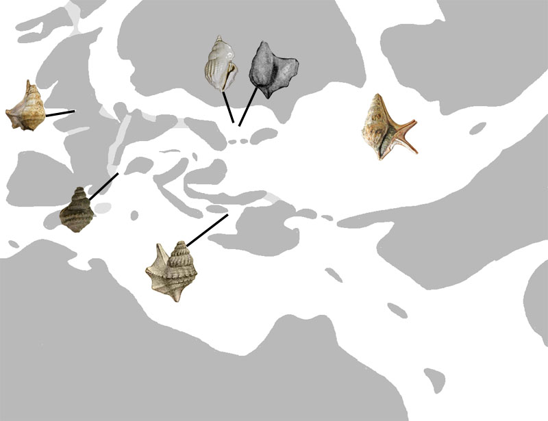 Aporrhais_Upper_Eocene_map.jpg