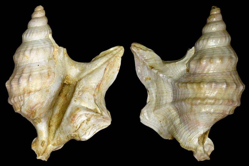snail site de rencontre
