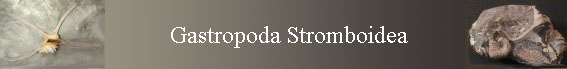 Gastropoda Stromboidea